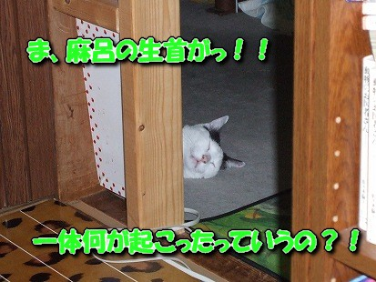 DSCF3815-1.jpg