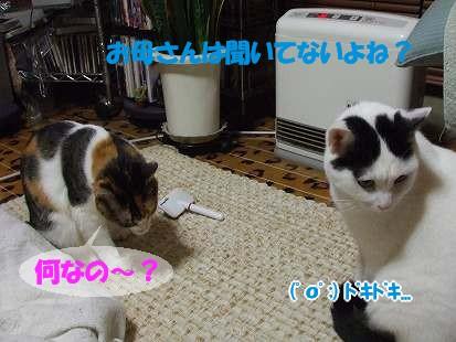 DSCF7033-1.jpg