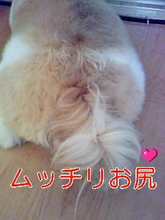 ぱんのおしり_0001