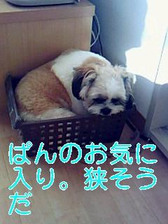 ぱんのお気に_0001