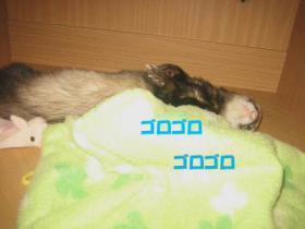 20070612211624.jpg