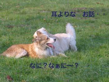 2007040111.jpg