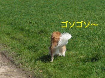 2007040606.jpg
