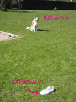 2007040802.jpg