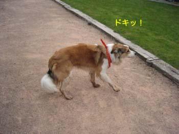 2007041307.jpg