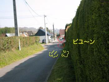 2007041708.jpg