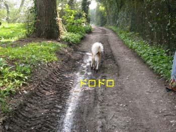 2007041918.jpg
