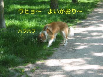 2007042204.jpg
