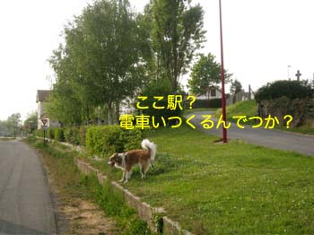 2007042911.jpg