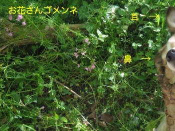 2007050309.jpg
