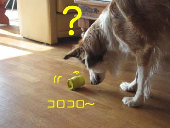 2007052402.jpg
