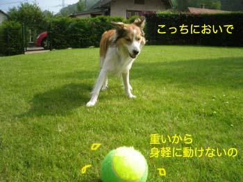 2007061312.jpg