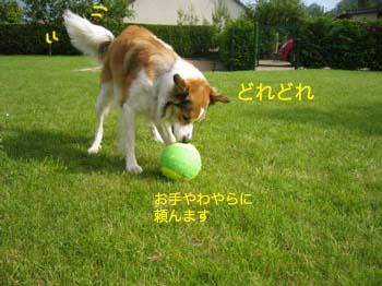 2007061313.jpg