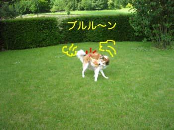 2007062005.jpg
