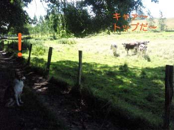 2007070103.jpg
