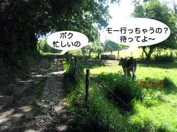 2007070111.jpg