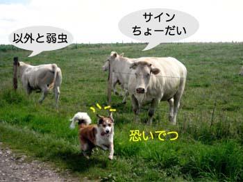 2007070117.jpg