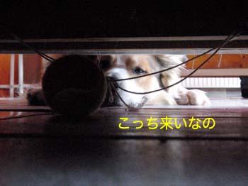 2007070309.jpg