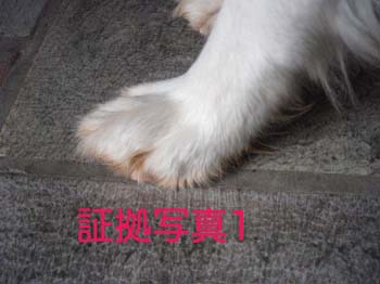 2007070502.jpg
