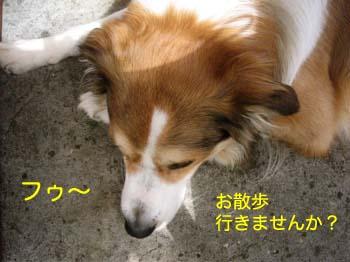 2007070912.jpg
