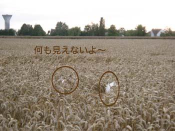 2007070914.jpg