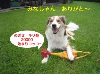 2007071105.jpg