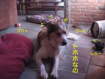 2007071308.jpg