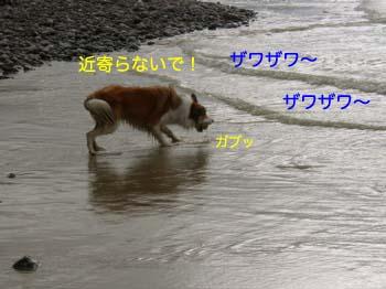 2007071517.jpg