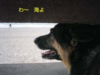 2007073009.jpg
