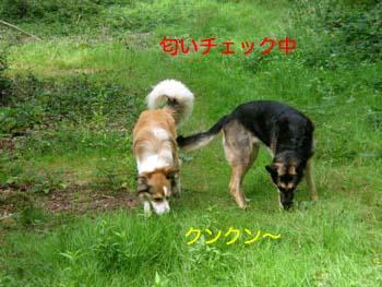 2007081506.jpg