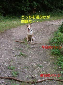 2007081813.jpg