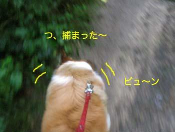 2007082206.jpg
