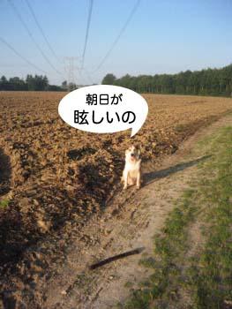 2007083104.jpg