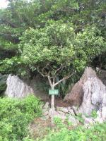 金剛石林山02