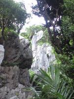金剛石林山06