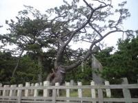 三保松原01