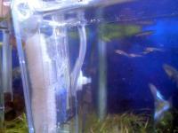 20071109/稚魚