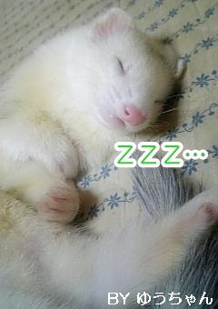 お休みタイム中