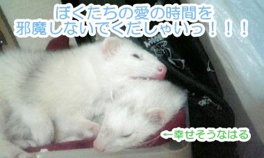 ゆうちゃんの抗議!
