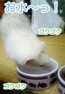 必死にお水の飲むゆうちゃん☆