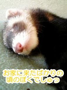 生後3ヶ月くらいのあゆむさん☆
