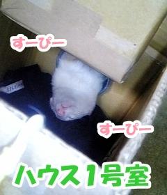 ハウス1号室☆