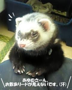 あゆむさんに撮影許可のお願い☆