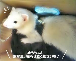 ゆうちゃんに撮影許可のお願い☆
