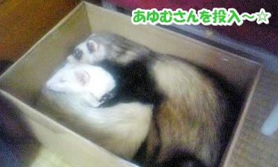 あゆむさんを投入~☆