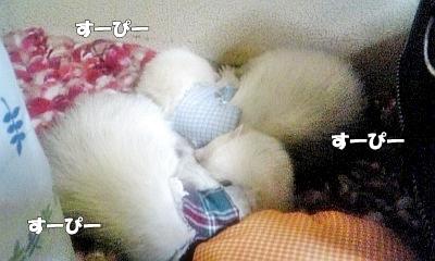 お休みタイム1☆