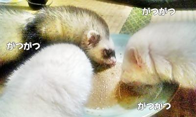 ご飯タイム中1☆
