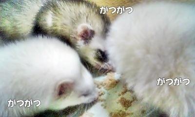 ご飯タイム中2☆