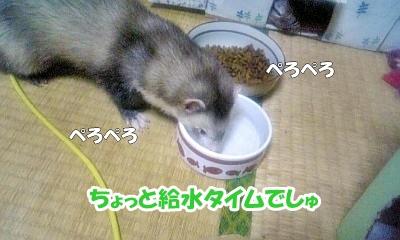 給水タイム☆