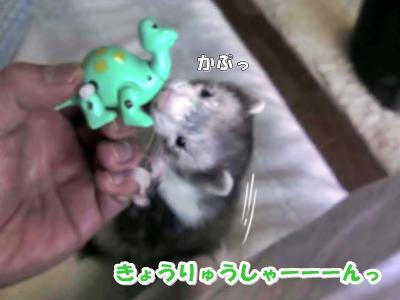 恐竜さんがお気に入り☆